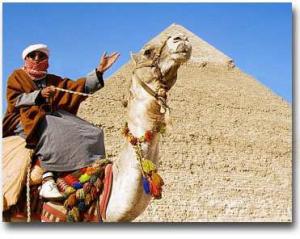 Wielbłąd - Kair